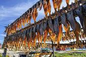 Rodebay 決済、グリーンランドの干物 — ストック写真