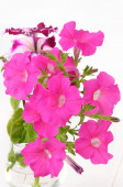 Pink petunia flowers in glass vase — Stockfoto