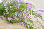 Calluna vulgaris (common heather) flowers on wooden surface — Stock Photo