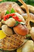 Fresh mushrooms in basket, close up view — Stock Photo