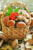 Fresh mushrooms and ashberry branch in basket  — Stock Photo