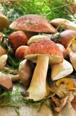 Verse champignons op houten tafel — Stockfoto