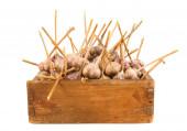 Garlic in an old box — Foto de Stock