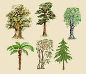 Trees illustration painted in vintage manner — Stock Photo