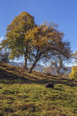 Autumn landscape with farm animals — Foto Stock