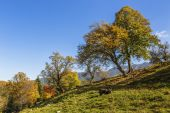 Autumn landscape with farm animals — Foto Stock