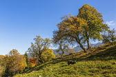 Autumn landscape with farm animals — Fotografia Stock