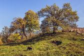 秋季景观与放牧山羊 — 图库照片