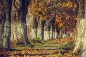 秋の穏やかな風景 — ストック写真