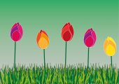 Tulips in a meadow — Stock Vector