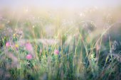 Abstract image of meadow — Stock Photo