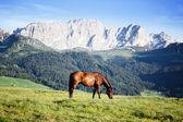 Horse at high mountains meadow — Foto de Stock