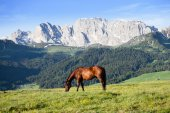 Horse at high mountains meadow — Foto de Stock