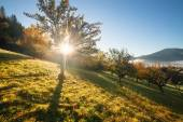 Fall colors garden at sunny morning — Stock Photo