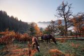 Countryside mountain view — Stockfoto