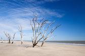 Botany Bay beach — Stok fotoğraf
