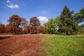 Autumn and summer park at sunny day — Stock Photo
