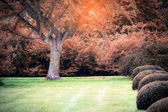 Jesień ogród w słoneczny dzień — Zdjęcie stockowe