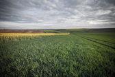 Retro style photo of beautiful summer field — Stock Photo