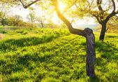 Sunny morning at summer garden — Stock Photo