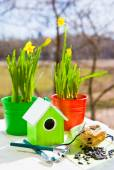 Green bird house and Narcissus in pots, shovel and seeds against garden in spring — Stock Photo