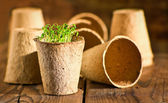 Potted seedlings growing in biodegradable peat moss pots on wooden background with copy space — Stock Photo
