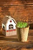 Potted seedlings growing in biodegradable peat moss pot and ceramic house — Stock Photo