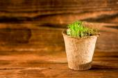 Potted seedlings growing in biodegradable peat moss pot on wooden background with copy space — Stock Photo