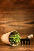 Peat pots and garden tools on wood background — Stock Photo