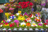 Colorful flowers on display on a market in Rome, Italy — Stock Photo