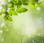 Spring abstract  background — Stock Photo