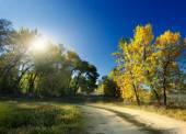 Autumn Landscape. road — Stock Photo