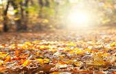 Colorful autumn ... — Stock Photo