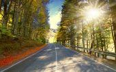 ゴールデン秋の森の道. — ストック写真