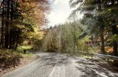 Curved road to forest in autumn  — Stock Photo