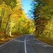 Forest road — Stock Photo #56811615