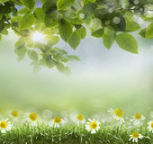 Natural green background . design — Photo