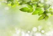Natur-Frühling-Hintergrund — Stockfoto
