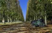 Row of bikes in the Versailles gardens — Stock Photo