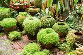 Pots in the garden with moss. — Foto de Stock