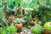 Pots in the garden with moss. — Stok fotoğraf