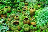 Pots dans le jardin de mousse. — Photo