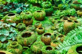 Pots in the garden with moss. — Stock fotografie