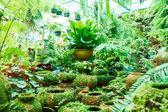 苔庭の鍋. — ストック写真