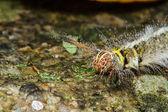 Hairy caterpillar on tree — Stock Photo
