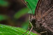 Brown butterfly on green leaf — Stock Photo
