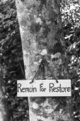 Signs remain for restore on tree — Stock Photo
