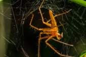 Spiders in the nest — Stock Photo