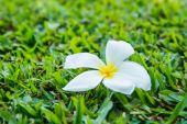 梅香在草地上 — 图库照片