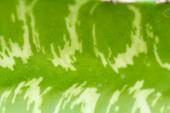 Close up of globe shaped cactus — Stock Photo